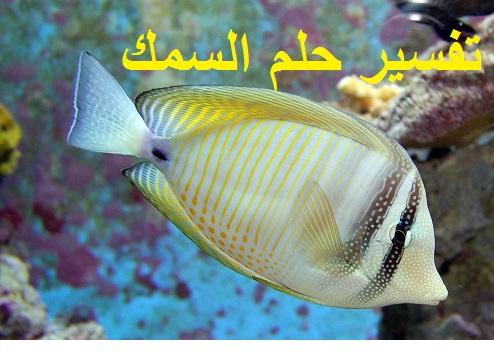 تفسير حلم السمك للرجل والمرأة