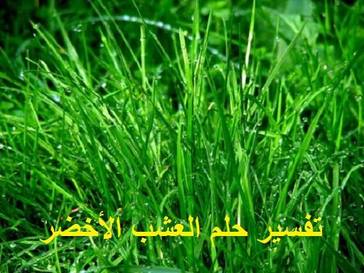 تفسير رؤية حلم العشب الأخضر