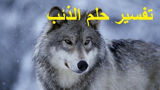 تفسير رؤية حلم الذئب ودلالته في المنام بالتفصيل