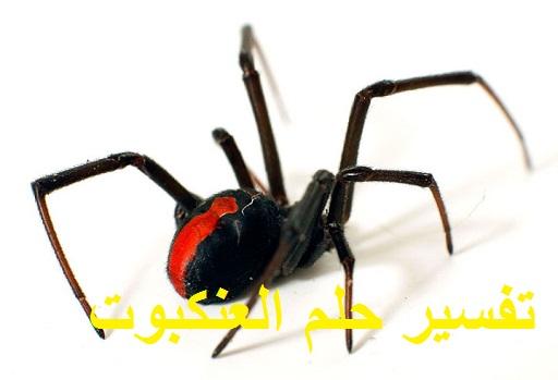 تفسير حلم رؤية العنكبوت 6 9