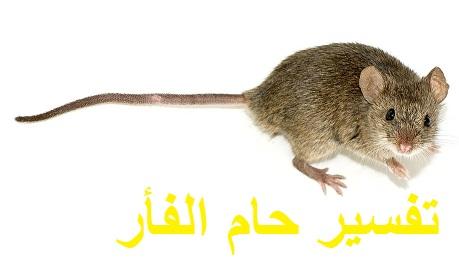 تفسير رؤية حلم الفأر ودلالته للعزباء للمتزوجة للحامل للمطلقة للرجل في المنام