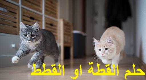 تفسير حلم القطة او القطط ودلالته للعزباء المتزوجة الحامل المطلقة الرجل بالتفصيل في المنام