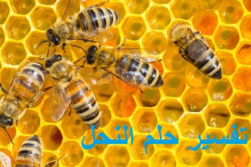 تفسير رؤية حلم النحل ودلالته للعزباء للمتزوجة للحامل للمطلقة للرجل في المنام