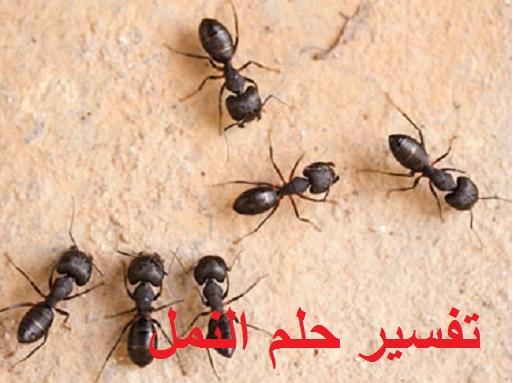 تفسير رؤية حلم النمل ودلالته للعزباء للمتزوجة للحامل للمطلقة للرجل في المنام