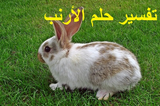 تفسير حلم الأرنب ودلالته في الحلم