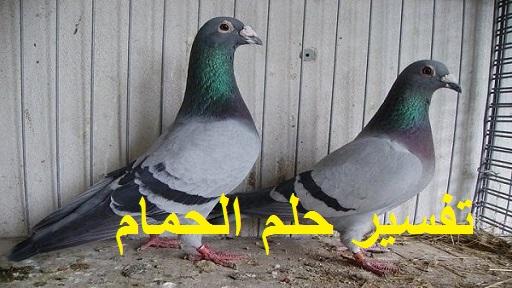 تفسير حلم طيور الحمام ودلالته في المنام