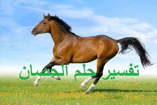 تفسير حلم الحصان ودلالته في المنام