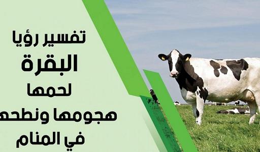 تفسير حلم رؤية البقرة في المنام ودلالتها بالتفصيل