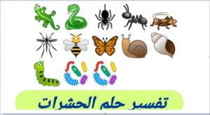 تفسير رؤية حلم الحشرات في المنام ودلالتها لابن سيرين