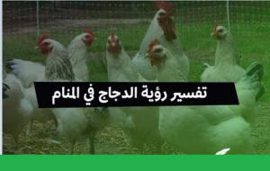 تفسير حلم رؤية الدجاج في المنام بالتفصيل ودلالتها لابن سيرين