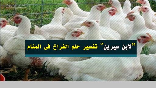 تفسير حلم الفراخ في المنام بالتفصيل ودلالتها لابن سيرين
